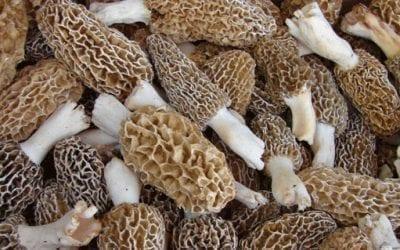 Know Oregon Mushroom Season Rules